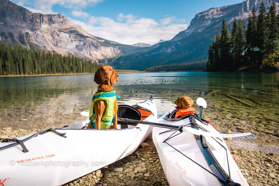 Two foldable Oru Kayaks with dogs in the Canadian Rockies Emerald Lake