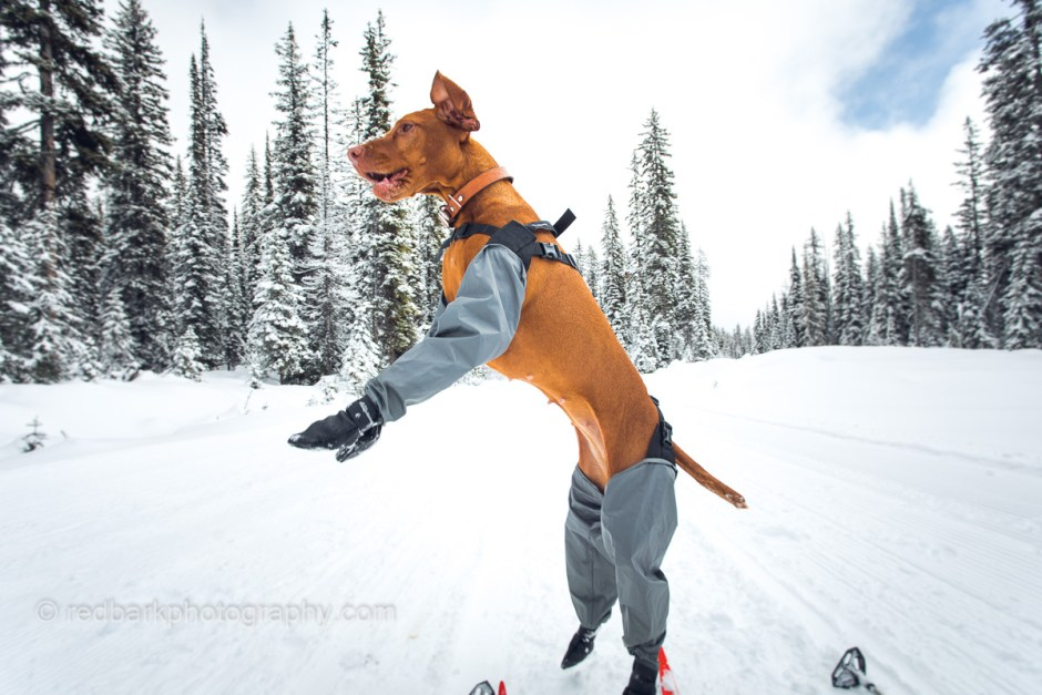 Dog gaiters from backcountry paws with boots attached