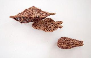 Kate Campbell-Pope, Bracket Fungi II