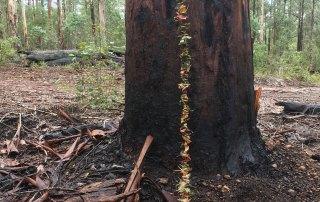 Kate Campbell-Pope, forest garland in-situ, karri trunk