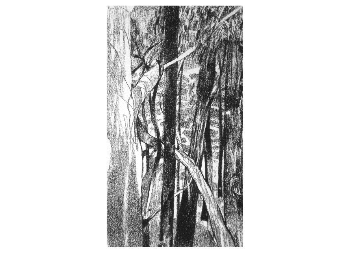 Ben Crappsley, Donnelly River Study #2