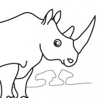 Drawing rhinoceros