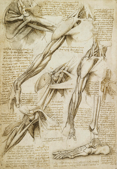 full human leg tendons diagram block of 8086 microprocessor with explanation leonardo da vinci drawings