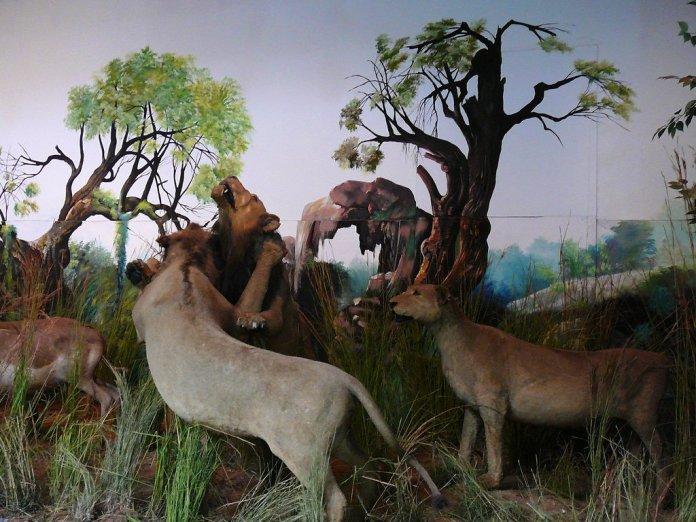 museum in maputo