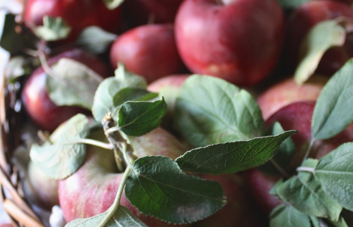 Apple Picking Decor Inspiration