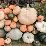 Heirloom Gourds are the New Autumn