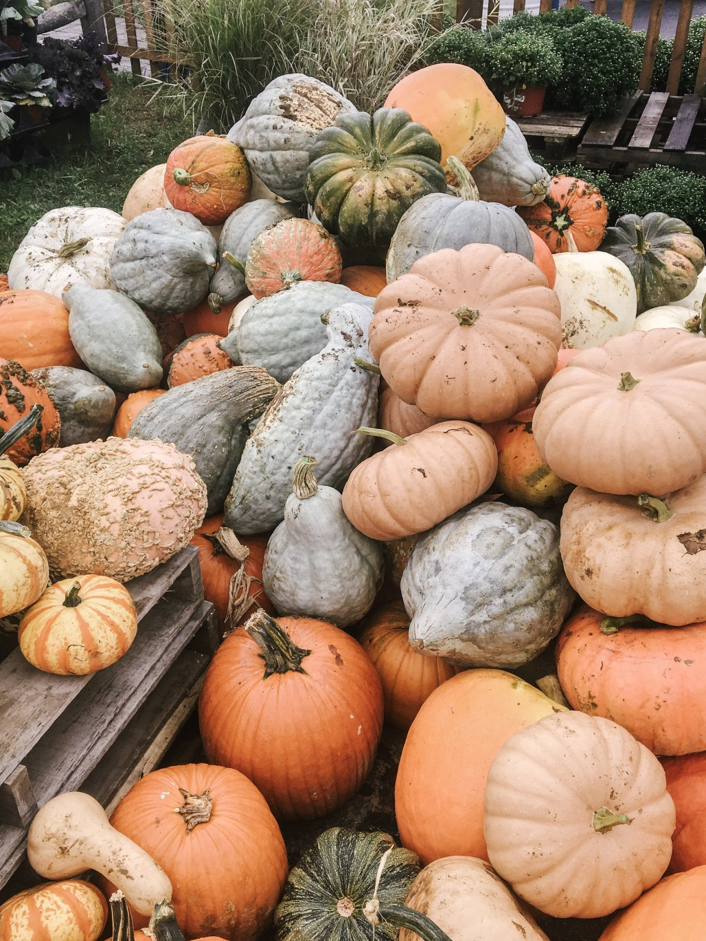 Heirloom Gourds are the New Autumn || Dreamery Events