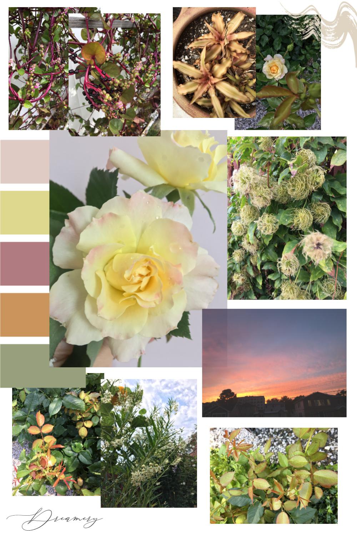 Autumn Vibes :: Golden Dessert Sunset    Dreamery Events