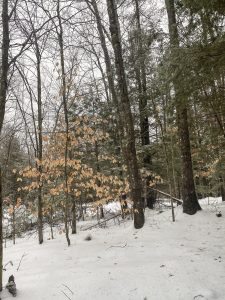 Traveling to ... a Winter Getaway House    New Hampshire    Dreamery Travels