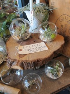 Succulent terrariums featuring locally hand-blown glass.
