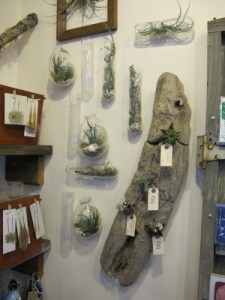 Wall-mounted terrariums and planters share a cozy corner of the shop with dried pressed flower earrings.