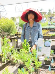 Too many choices of plants at Annie's Annuals in Richmond. A big hat, from Anthropologie, is a must to keep the sun at bay!