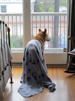 Portrait of a dog waiting for his morning walk (photo by Isabella).