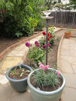 I pulled the vintage tea cup from our side-yard garden to our courtyard. It was made by Janet and given to us years ago!