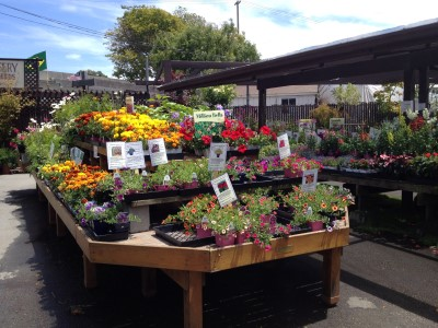 Westbrae has a nice selection of annuals and perennial plants.