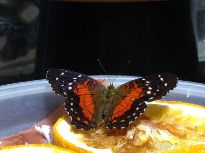 More butterflies.