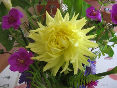 The first dinner plate-size yellow dahlia, which was planted by the first owner of our house.