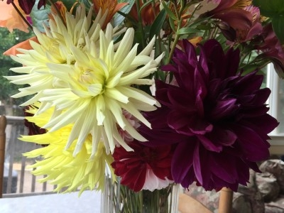 The light yellow dahlia, which is the first ones to come up, hung tough this season. And another dark magenta bloom!