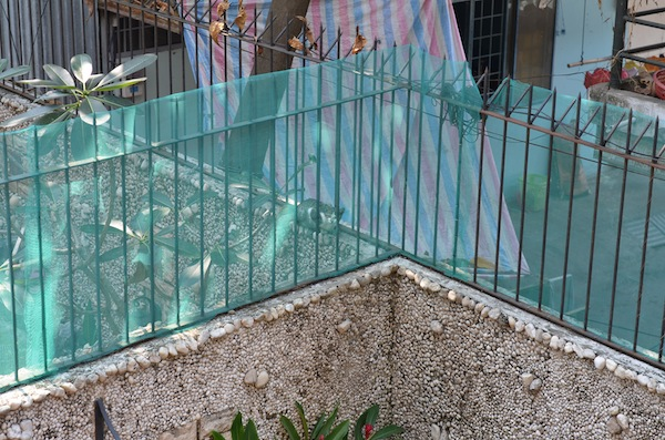 cat-proof fence