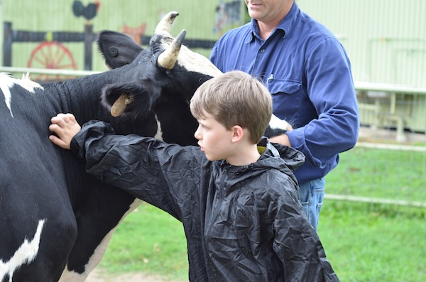 cow patting
