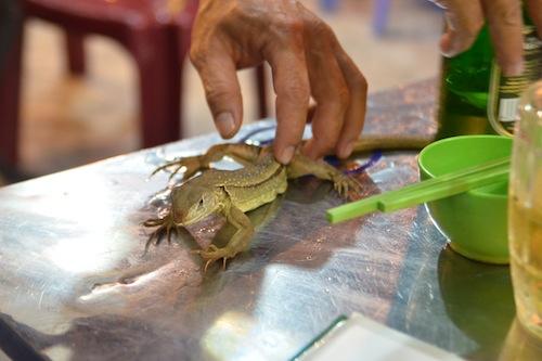 dong lizard