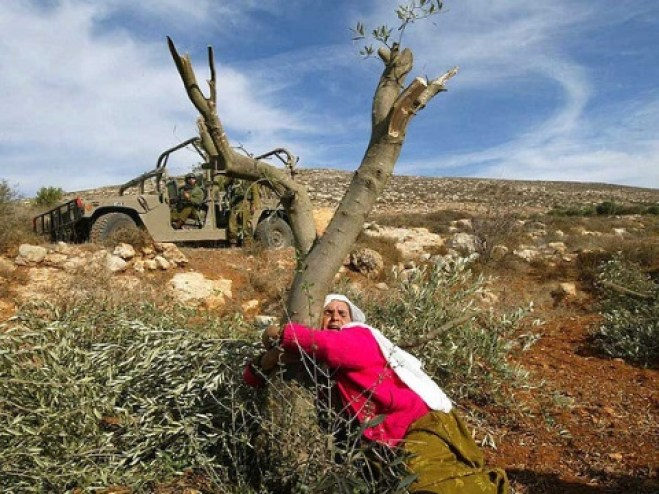 It's Olive Harvest Season in Palestine: Suffering Continues