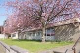 2014_04 Blackhall Library 6 (1)