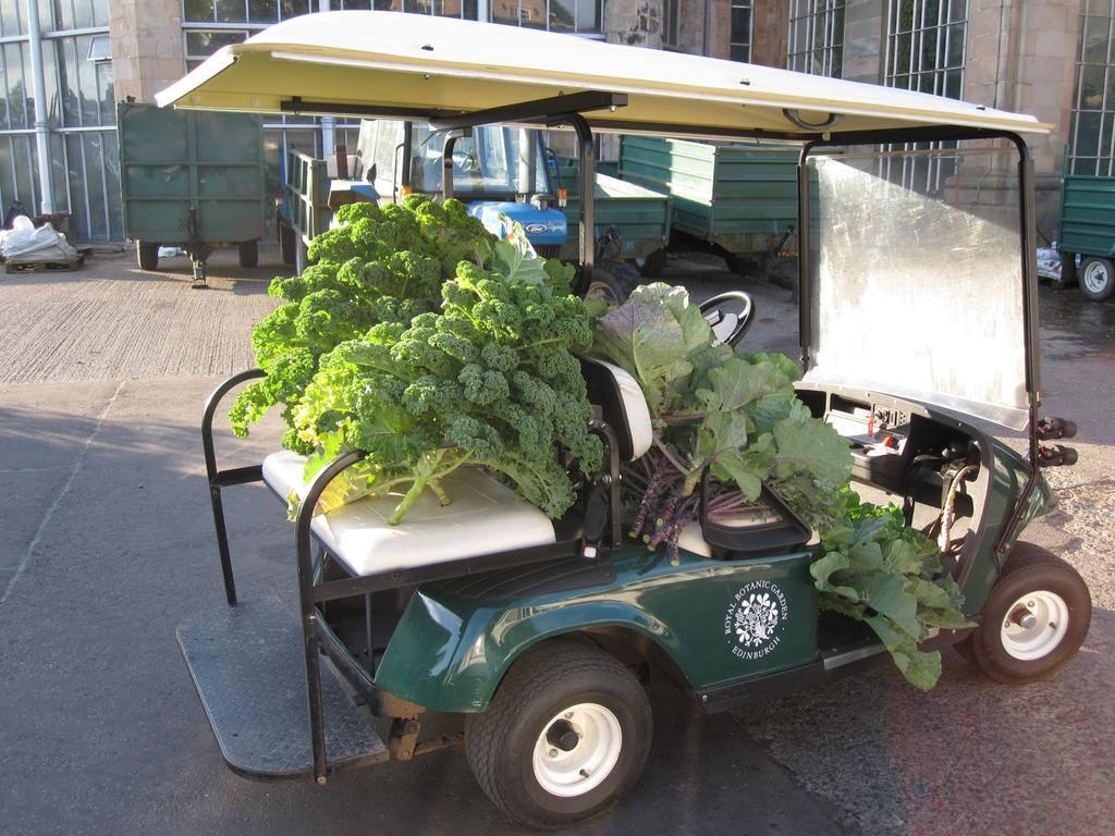vegetables at botanics