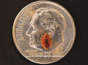 Landlords and bed bugs - pests in my rental property