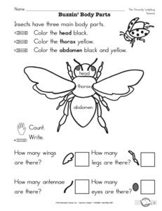 Ant Diagram Worksheet Ant Identification Wiring Diagram