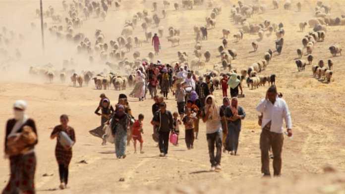 yazidi children