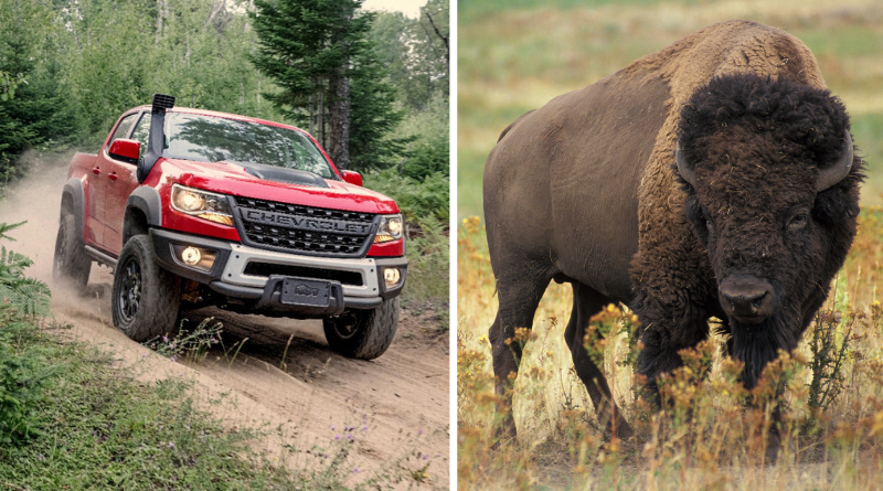 Don't let the name fool you. The ZR2 Bison is one off road midsize truck you don't want to ignore.