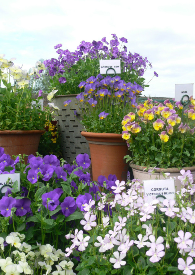 How To Start Your Own Nursery - The English Garden