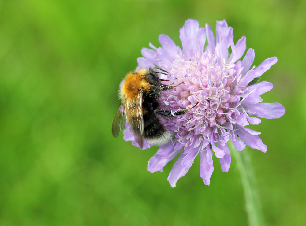 The 10 Best Flowers For Attracting Bees - The English Garden