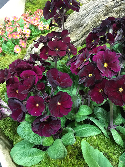 top 7 plants early spring