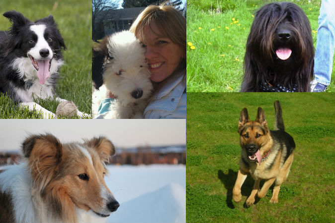 Dog Breeds: What Does Your Choice of Breed Say About You? | The Epoch Times