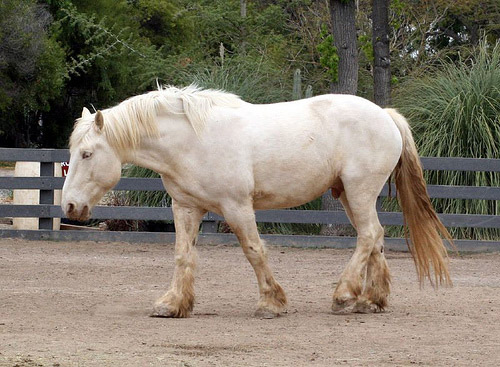 Image result for cream horse color