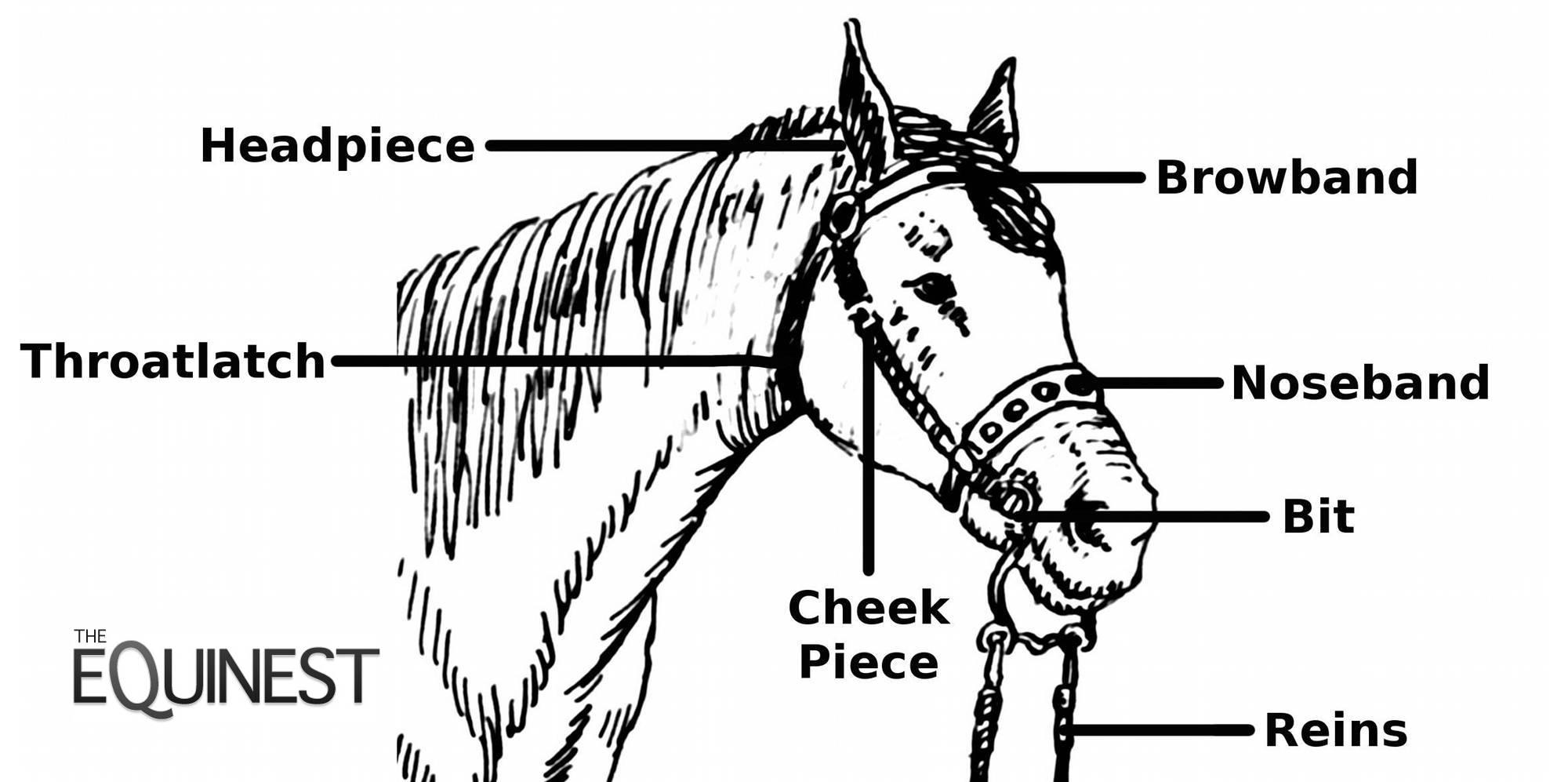Horse Bridle Terminology