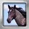 Horses Flip: Breed Flashcards