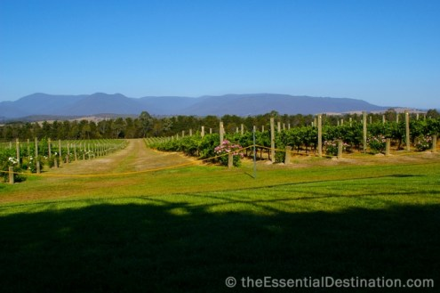 Yarra Valley winery