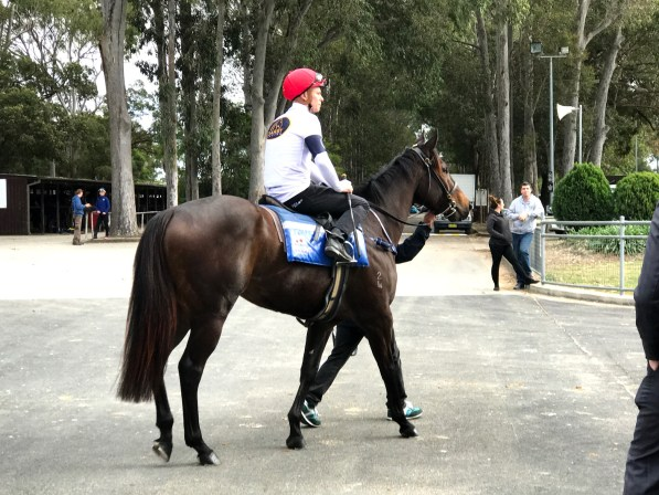 She Will Reign Impresses In Trial