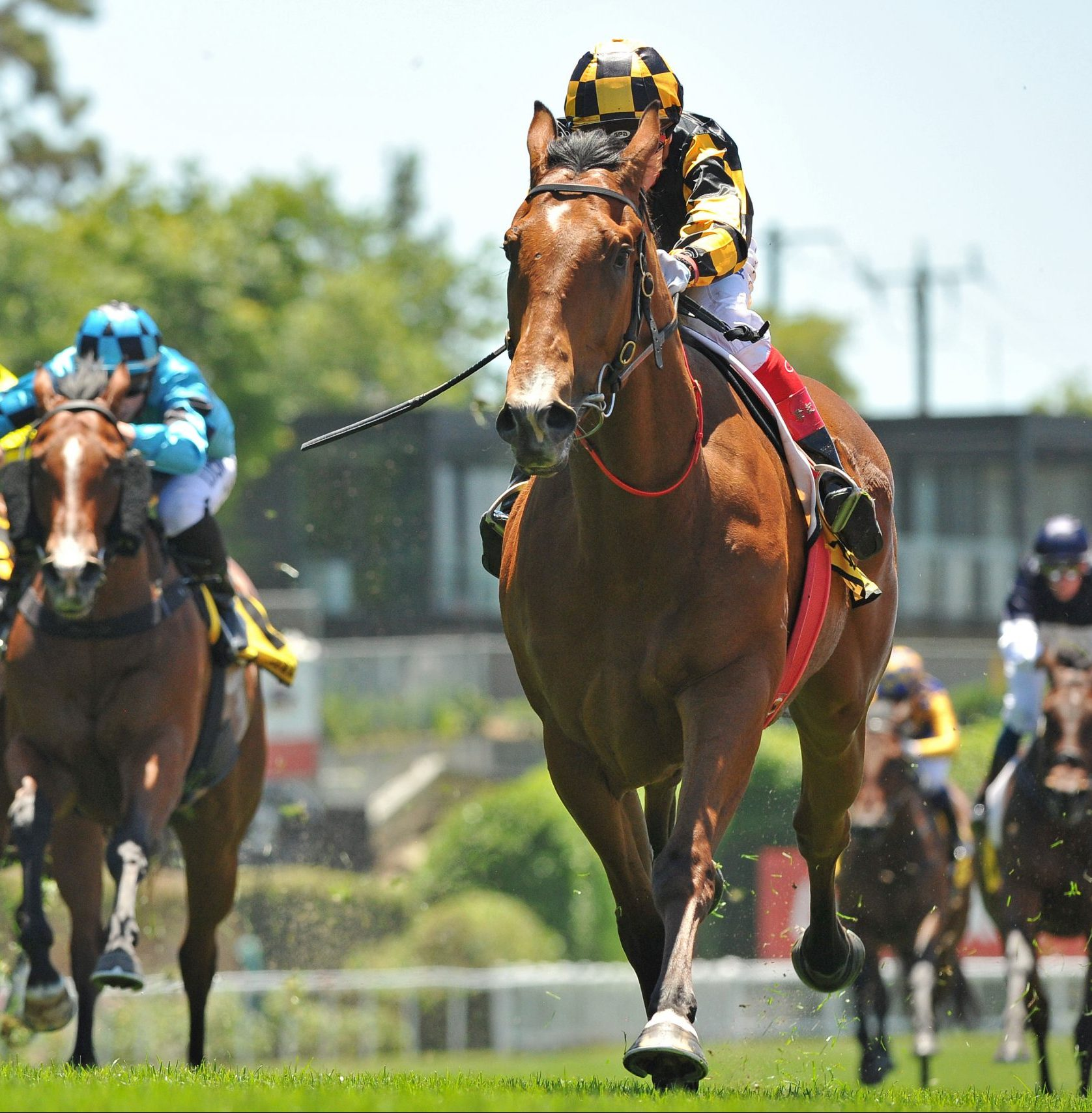 Behemoth A Grand Everest Selection For The Star