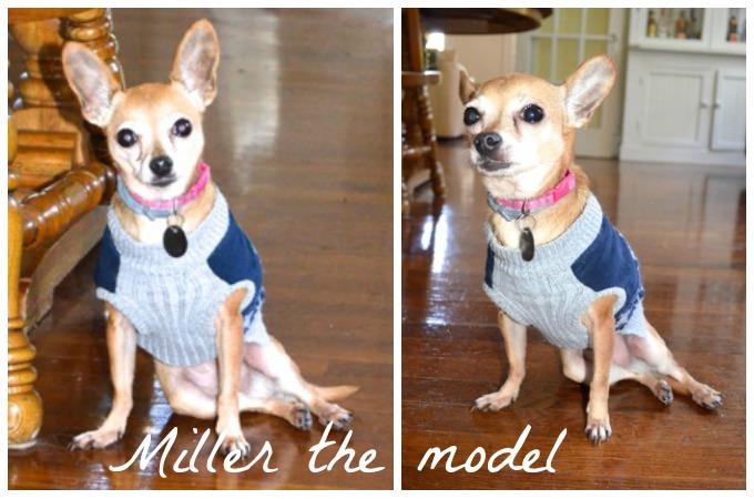 Miller the model dog   www.mybottomlessboyfriend.com