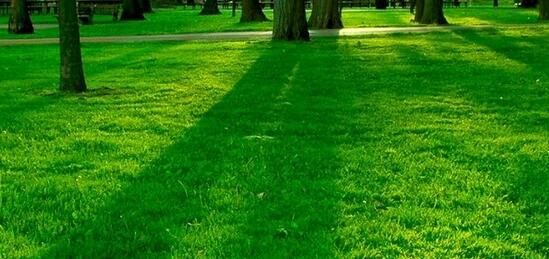 image - green grass
