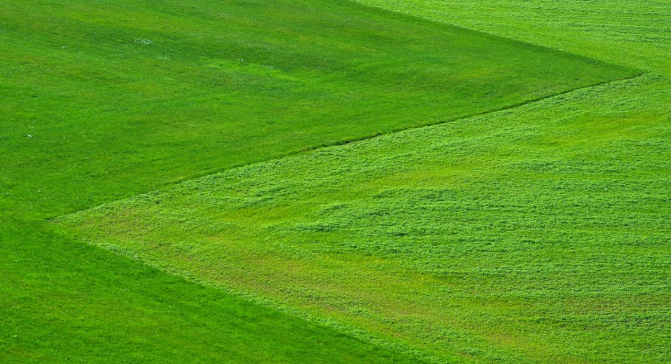 Top 5 Spring Images, green grass