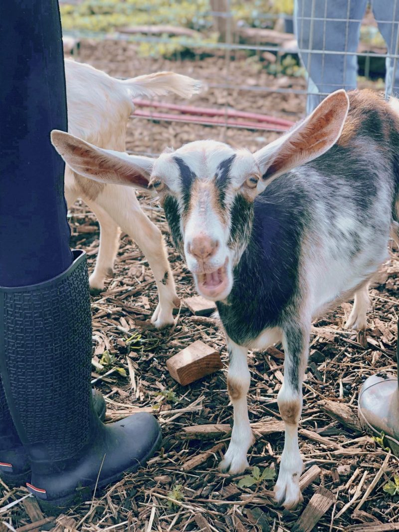 Vegan lifestyle blogger Kathryne from Thefabzilla takes you inside the Aloha Animal Sanctuary located in Kaneohe, Oahu, Hawaii