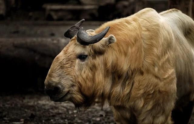 भूटान के बारे में 23 मजेदार तथ्य - Butan desh ke bare me jankari - Bhuatan in Hindi