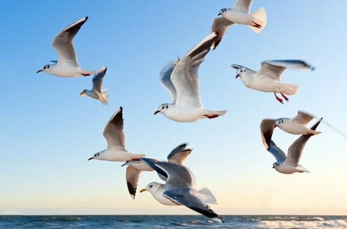 Amazing Facts about Migratory Birds in Hindi - दुनिया के 10 प्रवासी पक्षीओ के बारे