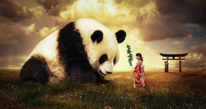 Interesting Facts about Giant Panda in Hindi