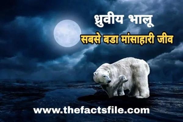 ध्रुवीय भालू के बारे में 15 रोचक तथ्य | Interesting Facts about Polar Bear in Hindi